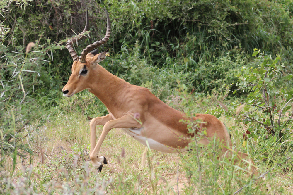 Payments Year of Gazelle