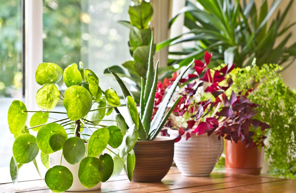 Bloomscape And Ting Into The Hip Houseplant Phenomenon