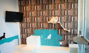 Retail Innovation: Luxury Hotels For Pets