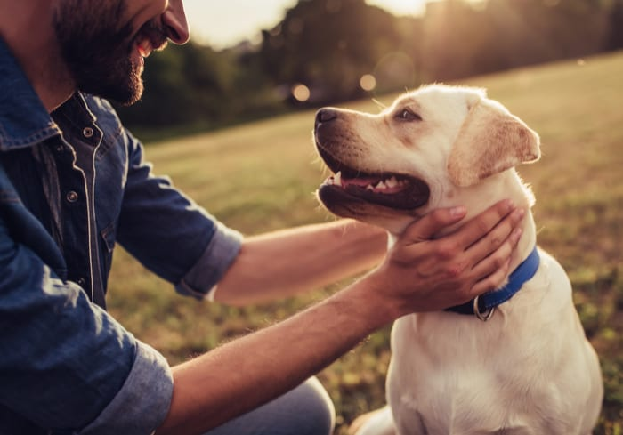 Good Dog On How To Find Man's Best Friend
