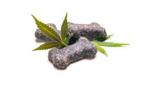 dog treats with pot leaves