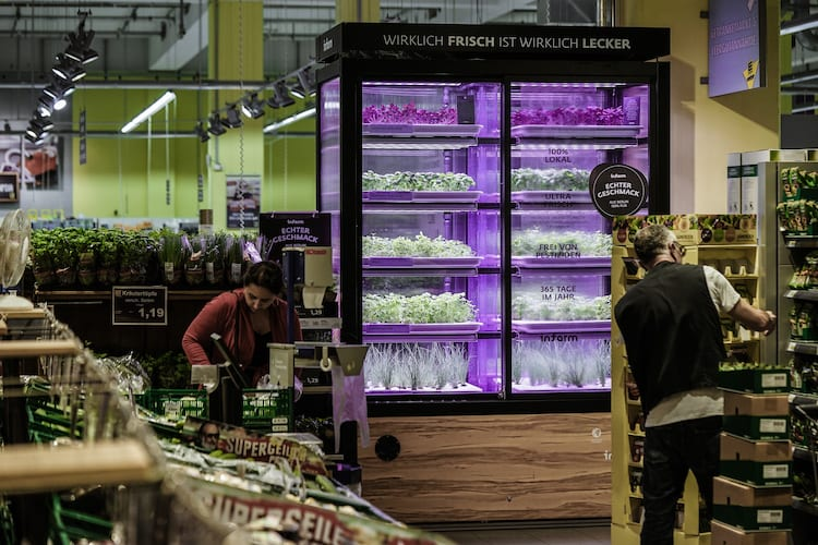 Kroger, Infarm Team Up To Launch In-Store Farms