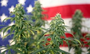 Regulators Detail Banking Rules For Hemp Firms