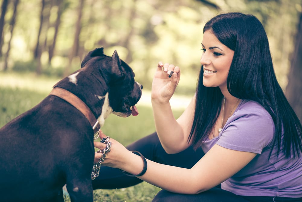 Making Pet Food More Pup- And Planet-Friendly