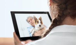 How Telemedicine Is Going To The Dogs
