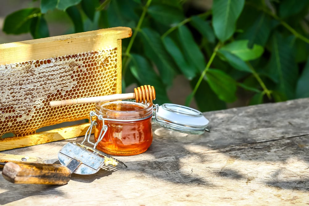 beekeeping honey